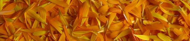 calendula-crop