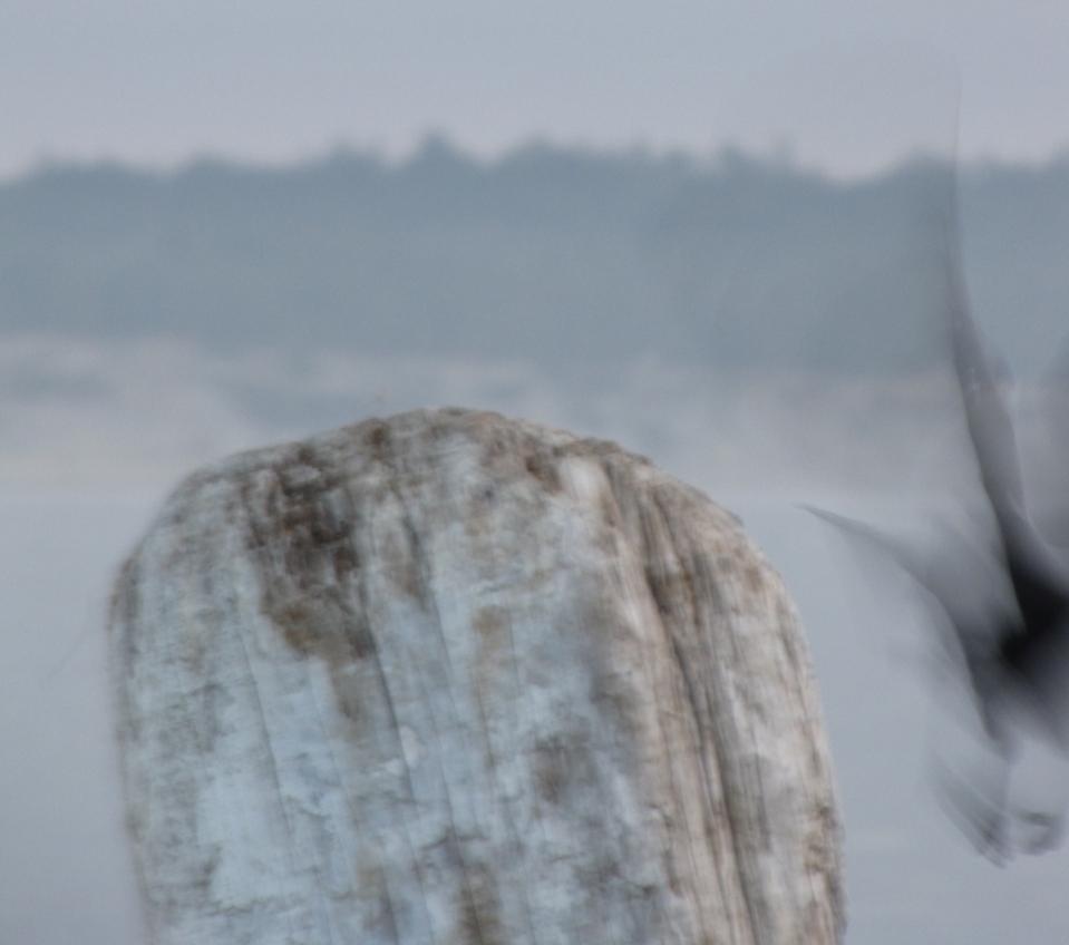 crow-blur-cropIMG_3724