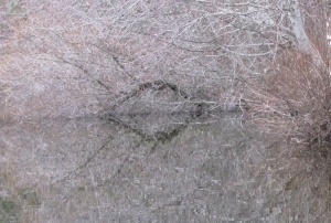 reflect-crop3